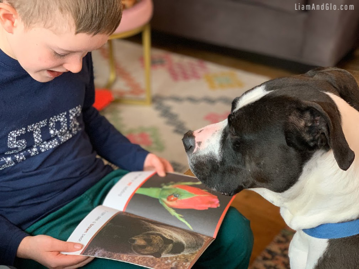 Reading Sight Word books to dog: Special Needs Homeschool week recap